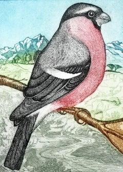 A bullfinch - XXI Century, Contemporary Figurative Print, Colourful, Birds