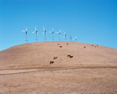 Herd, contemporary documentary photography, herd of cows and wind farm