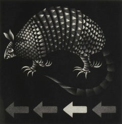 "Armadillo (the ""little armored one"" of the highway - only living shelled mammal)"