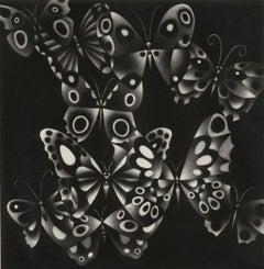 Papillons (butterflies)