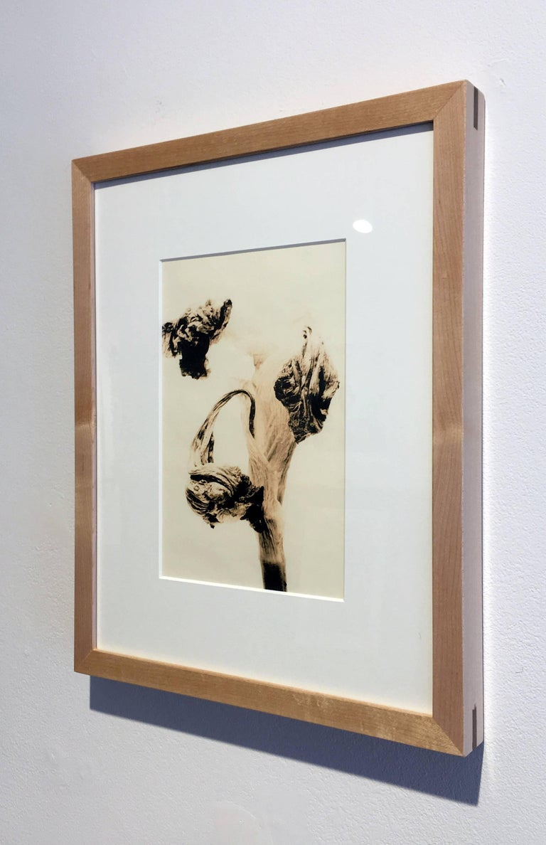 """Flora 6"", Framed Lith Processed Silver Gelatin Print"