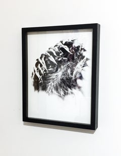 Thistle 23, Framed Black and White Photography, Digital Print
