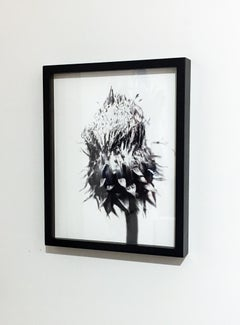 Thistle 24, Digital Print Black and White Photography, Framed