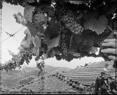 Looking at terraces above the Duoro, Above Piñao, 1995