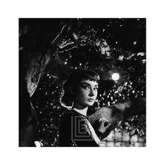 Audrey Hepburn Under Tree, Close, 1953