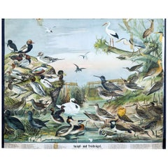 Marsh and Pond Birds, Vintage Bird Wall Chart