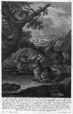 Antique hunting scene print in Romrod forest by Ridinger - Engraving - 18th c