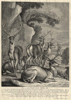 Antique hunting scene print with five deers by Ridinger - Engraving - 18th centu