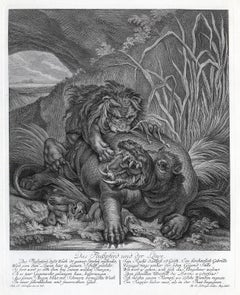 Hunting scene with a lion jumping a hippo by Ridinger - Engraving - 18th c