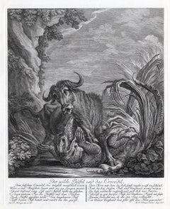 Hunting scene with water buffalo and crocodile by Ridinger - Engraving - 18th c