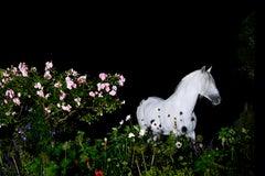 Night Scene, Number 1, Sussex