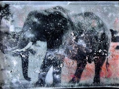 Nanyuki Elephant