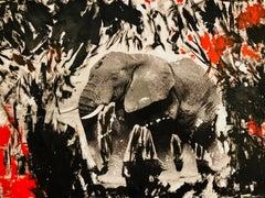 Ivory Black Elephant