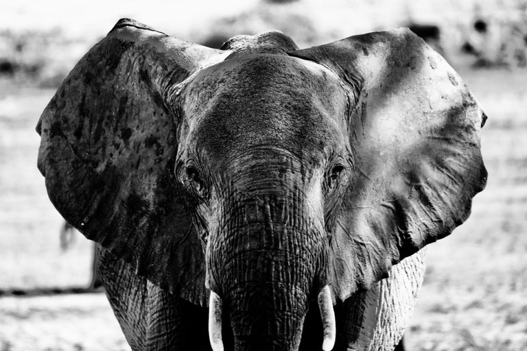 Maryam Ego-Aguirre Black and White Photograph - Faced with an Elephant