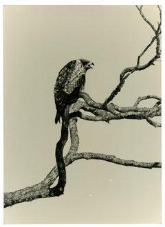 Yamamoto Masao, #1666, from Kawa=Flow, n. d., gelatin silver print.