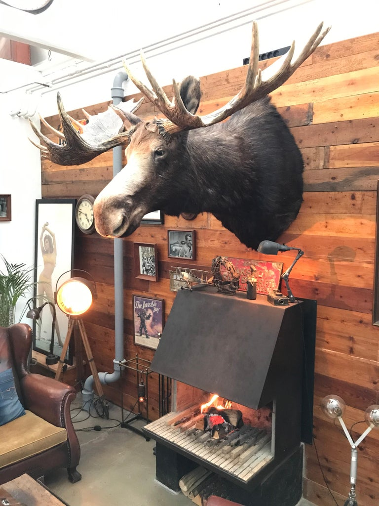 Hand-Crafted Massive and Impressive Hip Mounted Swedish Bull Elk with 30 Points For Sale
