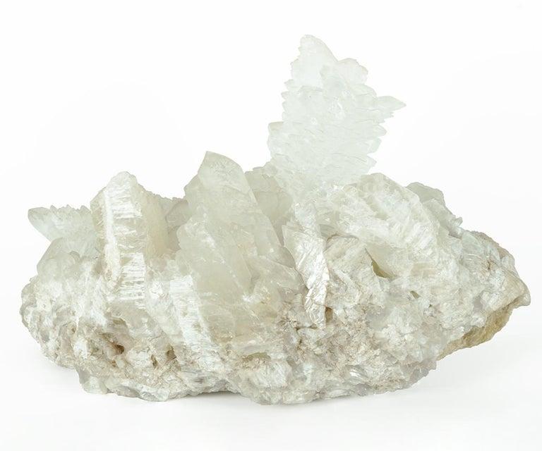 Prehistoric Massive Fish Tail Angel Wings Selenite Crystal For Sale