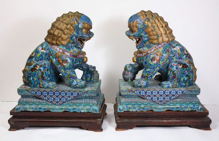 A massive pair of Chinese cloisonne enamel foo dogs / lions on wood stands, circa 1940.  Very fine quality enameling throughout.   These were used in front of temples and considered to be guardians by Asian tradition.  Measures: Without wood
