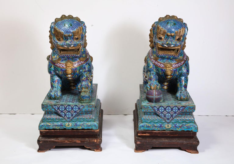 Chinese Export Massive Pair of Chinese Cloisonne Enamel Foo Dogs Lions on Wood Stands For Sale