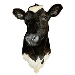 Antique Lifesize Bull Head Taxidermy For Sale at 1stdibs