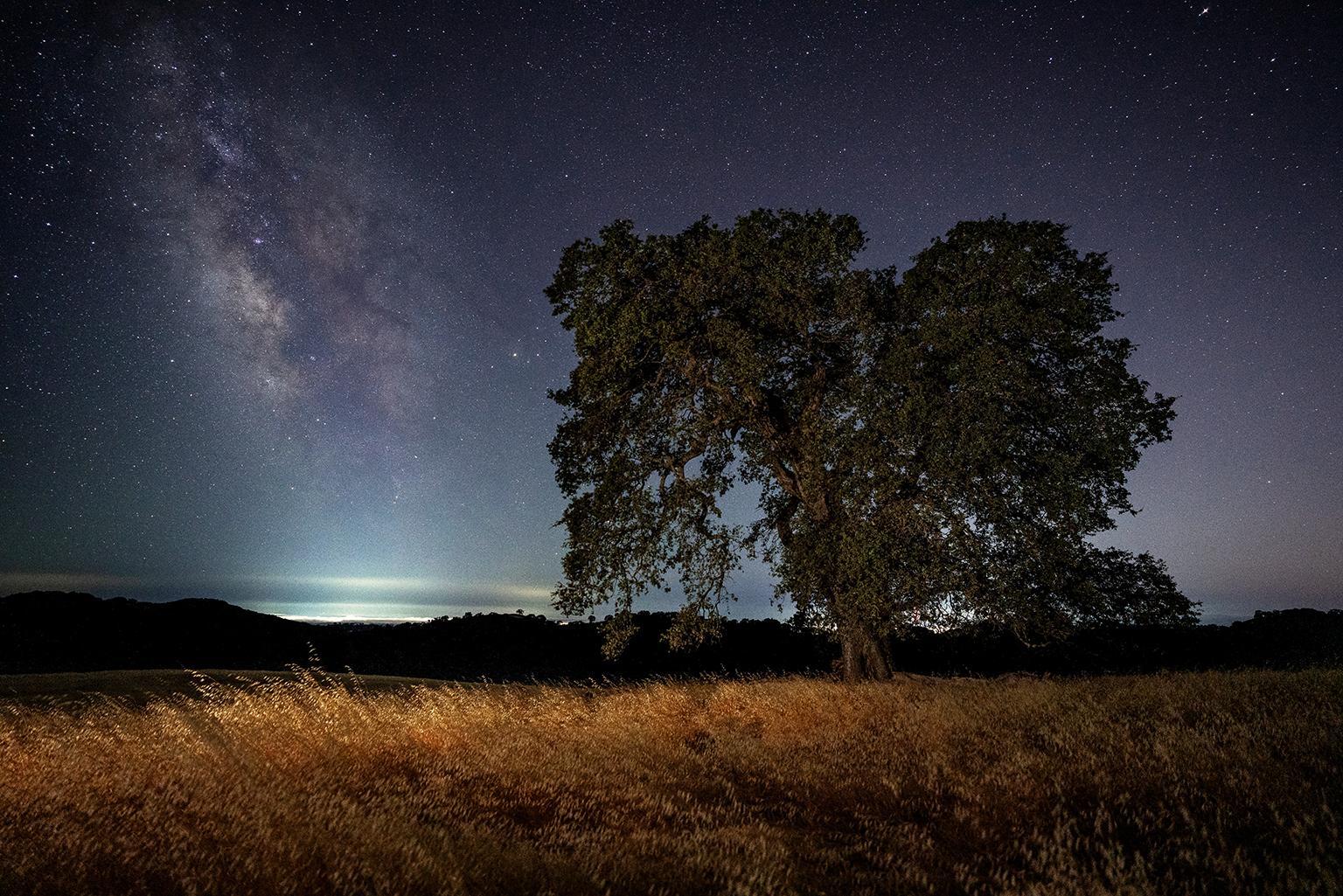 Northern California Milky Way - Night Photograph of Oak Tree in Meadow + Stars