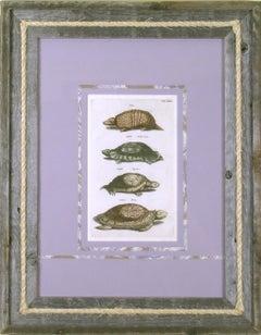 Tab. Lxxx Locusta Marina (Turtle) et. al.