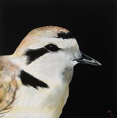 SNOWY PLOVER - oil painting of bird