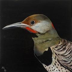 THE FLICKER - oil painting of bird
