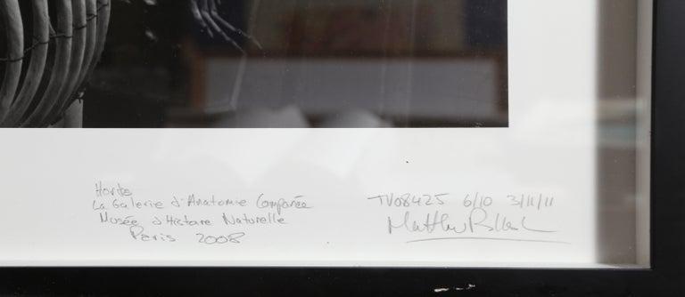 Hordes, La Galerie d'Anatomie Comparée, Musée d'Histoire Naturelle - Contemporary Photograph by Matthew Pillsbury