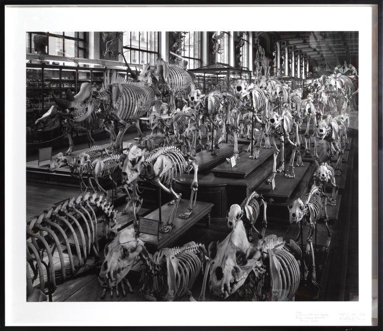 Matthew Pillsbury Black and White Photograph - Hordes, La Galerie d'Anatomie Comparée, Musée d'Histoire Naturelle