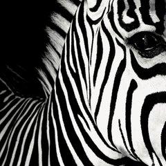 Half Angels Half Demons - Zebra #26, Small Black and White Photography