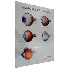 Medical Poster Print Wall Chart Human Eye Science