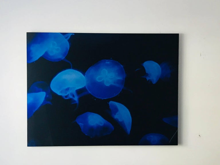 Plexiglass Medusa vii, Limited Edition Original Photography by Renato Freitas For Sale