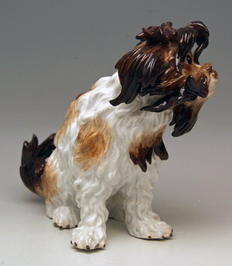 Meissen very lovely as well as gorgeous dog's figurine: It is a Bolognese Dog, excellently painted (dark brown and bright brown as well as white shaded) and stunningly modelled:  Look for example at dog's hair, please = the details are stunningly