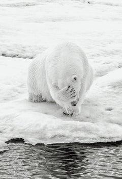 How Much Can A Polar Bear Bear? (Vertical)