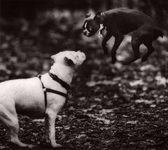 Dog Run #34