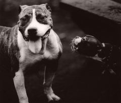 Dog Run #54