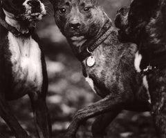 Dog Run #56