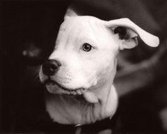 Dog Run #58