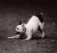Dog Run #68