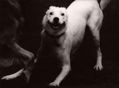 Dog Run #74
