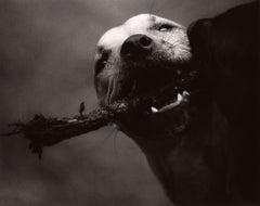 Dog Run #84