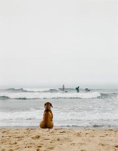 Surf Dog, Montauk, New York