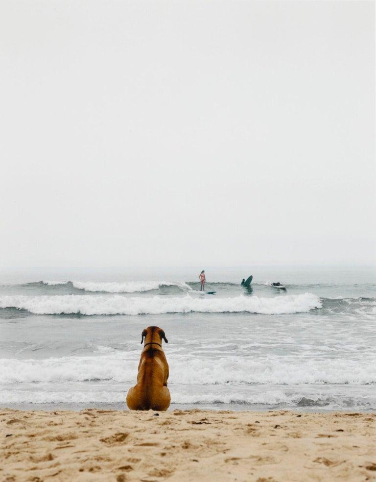 Michael Dweck Color Photograph - Surf Dog, Montauk, New York