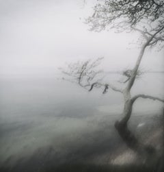 Tree at White Sea-contemporary fine art landscape photography with tree and mist