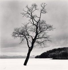 Amemasu Tree, Hokkaido, Japan