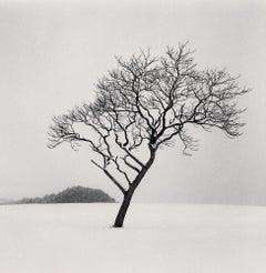Blackstone Hill Tree, Hokkaido, Japan
