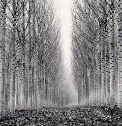 Corridor of Leaves, Guastalla, Emilia Romagna, Italy