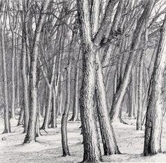 Daimyo Oak Forest, Hokkaido, Japan
