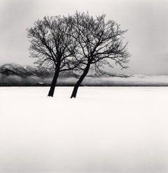 Dancing Trees, Kussharo Lake, Hokkaido, Japan